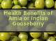 Health Benefits of Amla or Indian Gooseberry