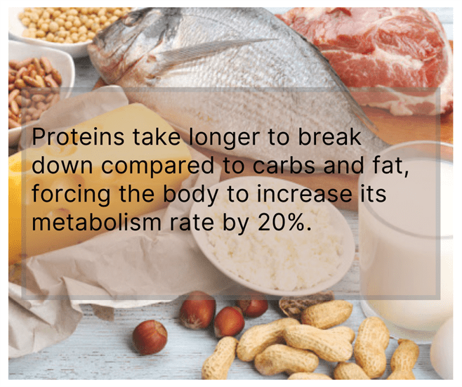 More Proteins in your diet to lose weight